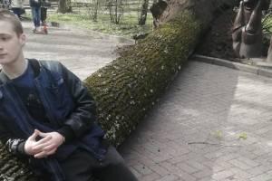 В Брянске в парке Толстого рухнуло огромное дерево