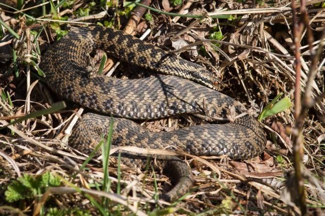 Брянцев пригласили отметить Международный день змеи