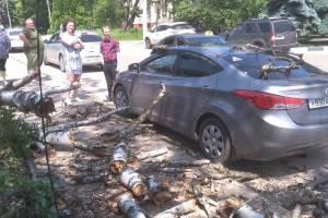 В Клинцах дерево рухнуло на припаркованную машину