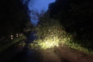 Под Новозыбковом упавшие деревья перекрыли дорогу