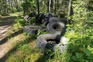В Брянском лесничестве нашли склад старых автошин