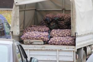 Брянцы съедают в год по 146 килограммов картошки