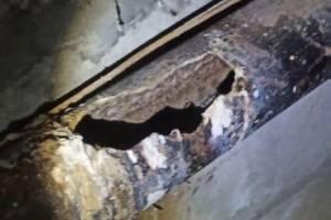 Из-за порыва трубы подвал брянской многоэтажки затопило фекалиями