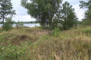 Под Брянском нашли возможные следы древнего селища