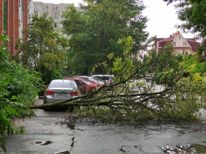 На улице Грибоедова в Брянске упало дерево