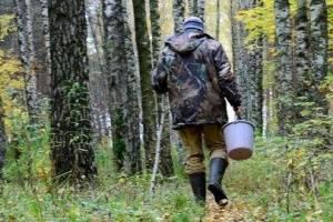 В лесах Брянской области трагически погибли трое грибников
