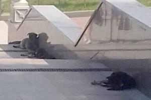 Под носом губернатора Богомаза злые собаки атаковали брянцев