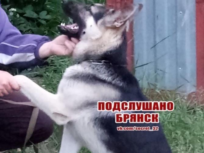 В Володарском районе Брянска украли собаку