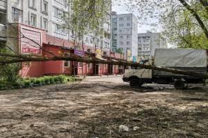 Во дворе многоэтажки по улице Брянского Фронта рухнуло дерево