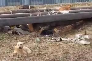 В Брянске детсад по улице Крахмалева оккупировали бродячие собаки и алкаши