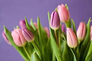 В Брянске женщинам-медикам 8 марта вручат тюльпаны
