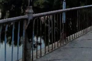 В Брянске активисты покрасят мост в Соловьях