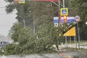 В Брянске рухнувшие деревья разбили 8 автомобилей