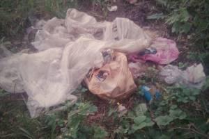 Жителей брянского поселка Локоть попросили не захламлять лесной оазис