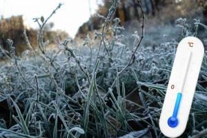 В Брянской области ожидаются заморозки утром 19 мая