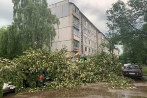 В Брянске упавшее дерево придавило припаркованные машины