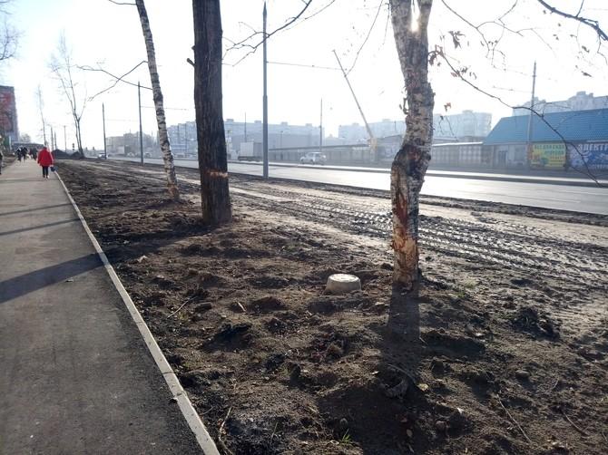 В Брянске на Авиационной варварски уничтожают деревья