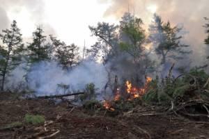 От брянских чиновников потребовали обезопасить села от природных пожаров