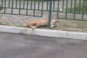 В Брянске догхантеры отравили собак в микрорайоне Сосновый Бор