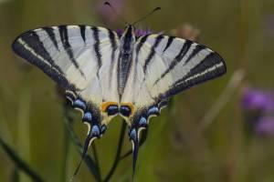 Брянцам предложили улучшить жизнь редкой бабочки