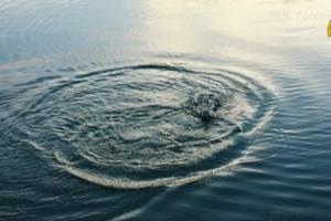 На озере Совхозном в Стародубе утонул 45-летний мужчина