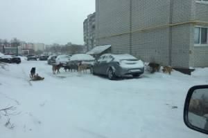 Путевку оккупировала стая бродячих собак