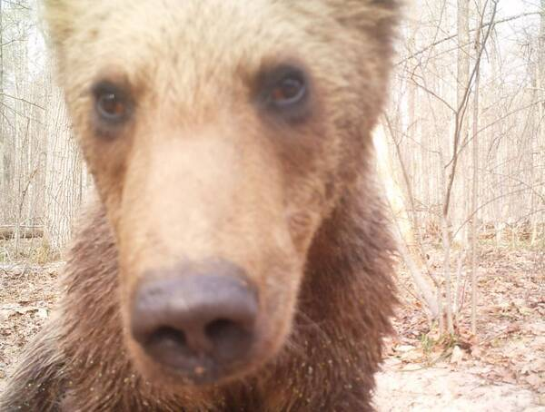 В «Брянском лесу» медвежонок сделал селфи