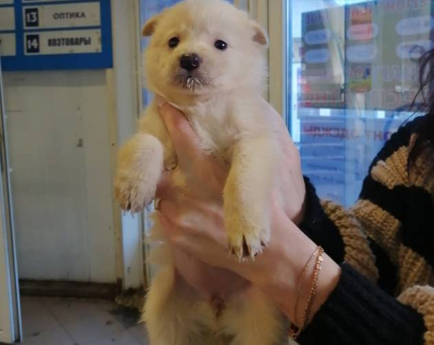 В Брянске на Новостройке подкинули к торговому центру мешок со щенками