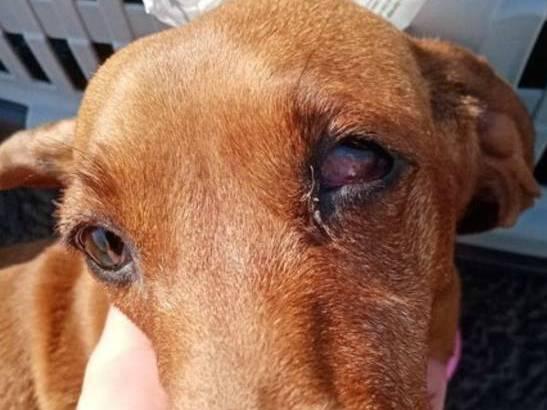 «Аэрофлот» не признал вину в травме собаки пассажирки из Брянска