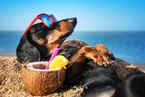 На Брянщине августовская жара сохранится в понедельник
