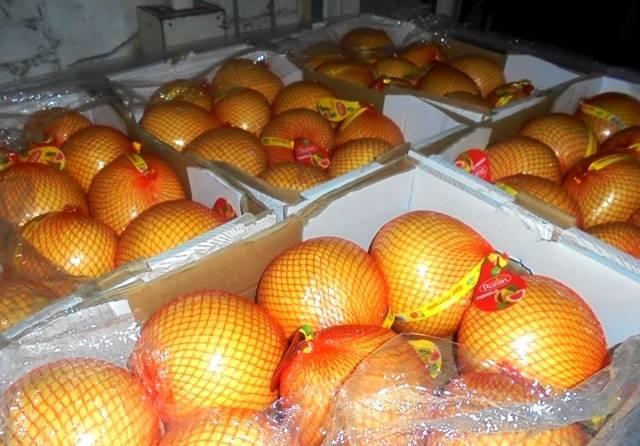 В Брянской области уничтожили 18 тонн подозрительных помело