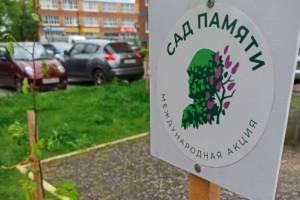 В Брянске высадили 15 лип на территории ЖК «Речной»