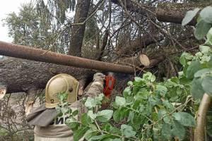 Из-за урагана в Брянской области без света остались 1200 человек