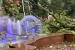 В Брянске рухнуло дерево в фонтан Круглого сквера