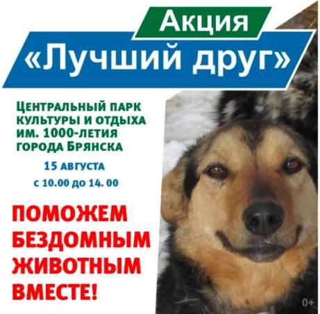 Брянцам предложили познакомиться с собаками из приюта