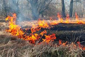 В Сельцо женщина потушила пять пожаров в лесу