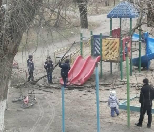 В Брянске сухие ветки рухнули на детскую площадку