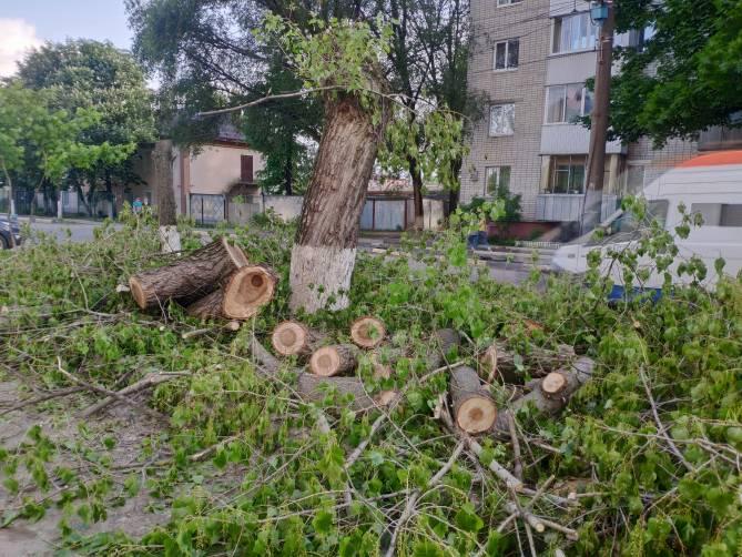 В Брянске из-за расширения вырубили деревья на улице Димитрова
