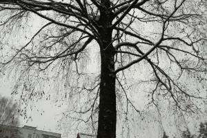 В Брянске спасли застрявшего на высоком дереве кота