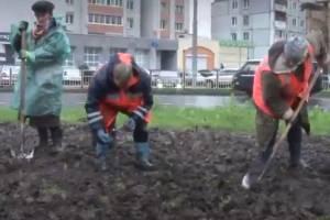 Будущей весной Советский район Брянска украсят 40 тысяч тюльпанов