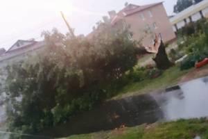 В Выгоничах молния ударила в дерево и переломила его