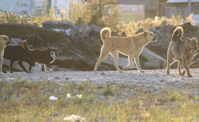 В Брянске бродячий пёс напал на мужчину