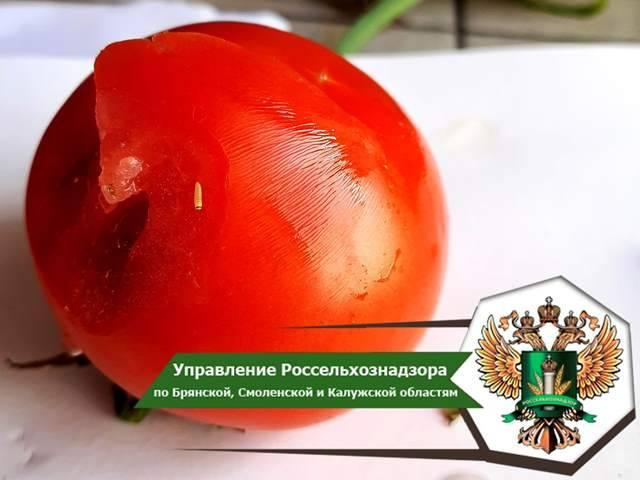 В Брянскую область не пустили 19,8 тонны турецких томатов