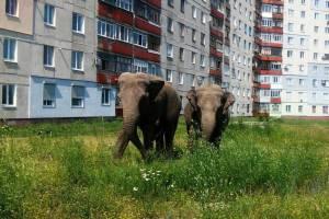 В Володарском районе Брянска поселились слоны и динозавры