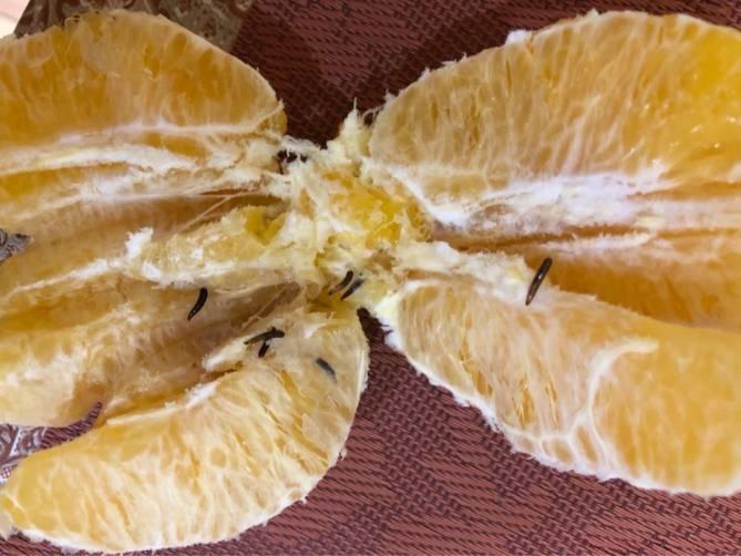 Жительницу Брянска шокировали черви в апельсинах из «Пятерочки»