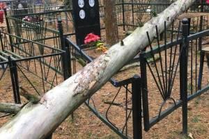 В Брянске на мамоновском кладбище старая сосна рухнула на могилы