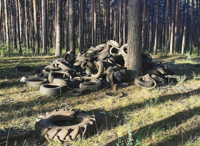 Брянская прокуратура требует очистить лес от покрышек