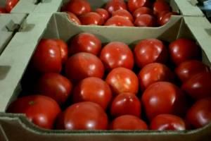 На Брянщине уничтожили 7,5 тонны томатов и перцев