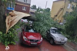 В Брянске на улице Софьи Перовской дерево рухнуло на припаркованные автомобили