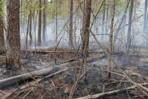 В Брянской области потушили лесной пожар